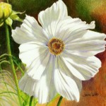 october-flower-cosmos-janae-lehto