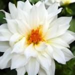 white-flower-1