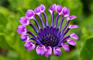 60-beautiful-flower-pictures-41