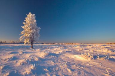 winter ree